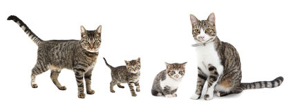 Cats and kittens. Cats, cat, kittens and kitten Royalty Free Stock Photo