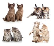 Cats or kittens pair set isolated. On white stock photography