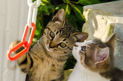 Cats kittens playing wild strays stock photos