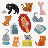 Cats kitty vector characters. Cats collection vector silhouette. Cute domestic cats different animals. Different cats young adorable tail symbol playful paw Stock Image