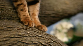 Cats Legs And Feet. Close up shot of a cats legs and feet on the tree branch stock video footage