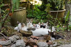 Cats leisure time with family. Group of cats lying around rocks having time together Stock Photos