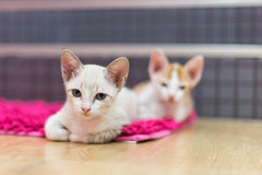 Cats lie on the carpet Stock Image