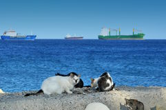 Cats at Limassol molo. Cat on a rock on to of the Limassol Harbor Royalty Free Stock Photo