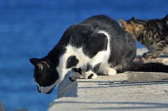 Cats at Limassol molo Stock Photos