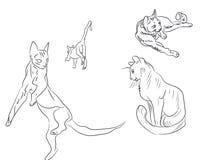 Cat lines, vector vector illustration