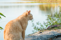 Cats that live in the park Stock Photography