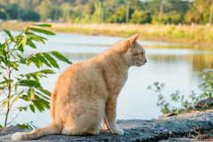 Cats that live in the park Stock Photos