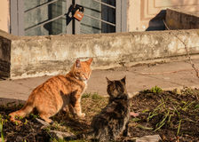 Cats. Living on the street near the building royalty free stock photography