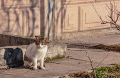 Cats. Living on the street near the building stock image