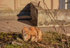 Cats. Living on the street near the building royalty free stock image