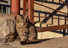 Cats. Living on the street near the building royalty free stock images