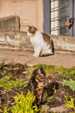Cats. Living on the street near the building stock photo