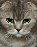 Cats look royalty free stock photos
