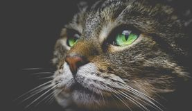 Cats look Stock Image