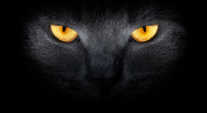Cats look from darkness. Glowing yellow cat eyes look at you out of the darkness Stock Photo