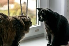 Cats look at each other stock image