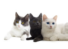 Cats look. On a white background Stock Image