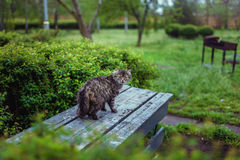 Cats Looking At Camera. In garden Stock Images