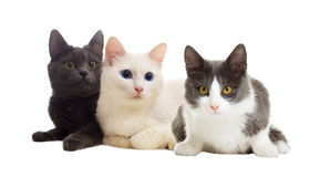 Cats looking Royalty Free Stock Image