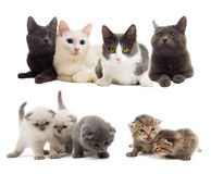 Cats looking Stock Photography