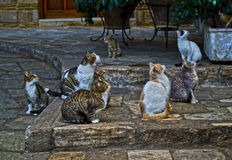 Cats looking up Royalty Free Stock Photo