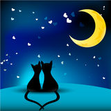 Cats in love. Two cats in love looking on Moon Stock Photo