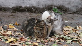 Cats love. Two wild homeless cat on the street. Two cats, one white with gray and the other black with brown, sitting on yellow autumn leaves fallen on the stock footage