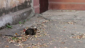 Cats love. Two wild homeless cat on the street stock video