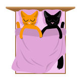 Cats Lovers in bed. Pets sleep. Romantic animal Royalty Free Stock Image
