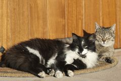 Cats lying resting on the doormat near a door stock photography