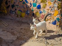 Cats in medina of Safi, Morocco. Cats in alleys of medina in Safi, Morocco royalty free stock images