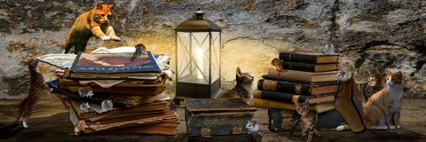 Cats and mice with books and lantern Stock Image