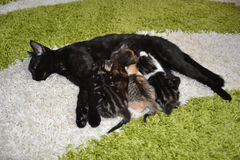 Cats mom Stock Images