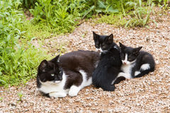 Cats. Mother and little cats in a park Royalty Free Stock Photos