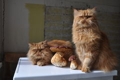 Cats and mushrooms stock photography