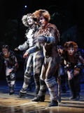 CATS Musical Stock Photos