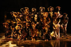 CATS Musical Royalty Free Stock Images