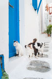 Cats on Mykonos Royalty Free Stock Photography