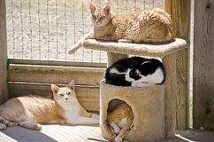 Cats napping in the sunshine Stock Photo