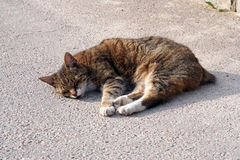 Cats naptime. Cat sleeping on the warm asphalt Royalty Free Stock Image
