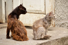 Cats near the old house look in the same direction Royalty Free Stock Photography