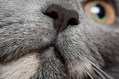 Cats nose. Closeup view of cats nose and eye Royalty Free Stock Photos