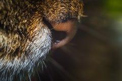 Cat nose close-up Stock Photography