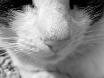 Cats nose. Detail of the nose black and white cats stock photos