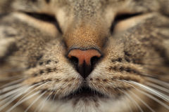 Cats nose Royalty Free Stock Photo