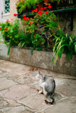 Cats in the old town of Budva, Kotor, Dubrovnik. Croatia and Mon Royalty Free Stock Images