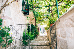 Cats in the old town of Budva, Kotor, Dubrovnik. Croatia and Mon Stock Images