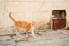 Cats in the old town of Budva, Kotor, Dubrovnik. Croatia and Mon Stock Photo