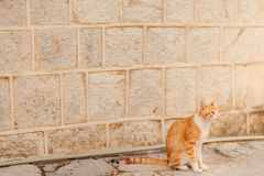 Cats in the old town of Budva, Kotor, Dubrovnik. Croatia and Mon Royalty Free Stock Photo